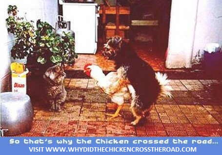 dog and chicken having sex